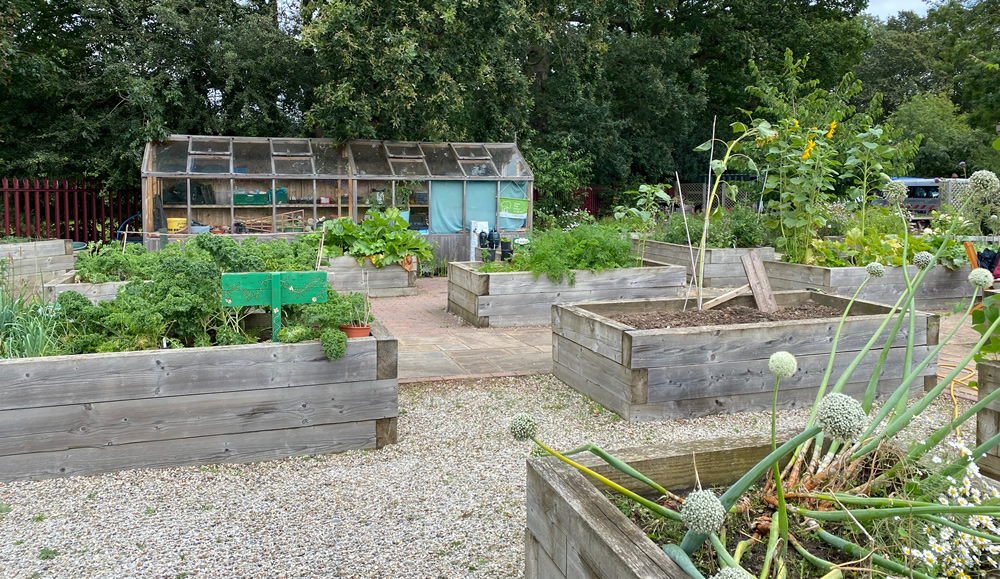 Raised beds in the foreground and a greenhouse in the background at the Trust Links Rochford site